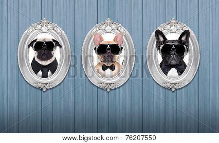 Dog In Frames