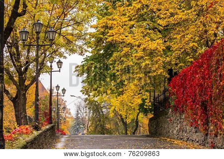 Autumn Cityscape After Rain, With Yellowed Trees And Street Lamps