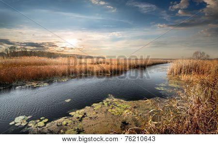 Autumn river and reeds