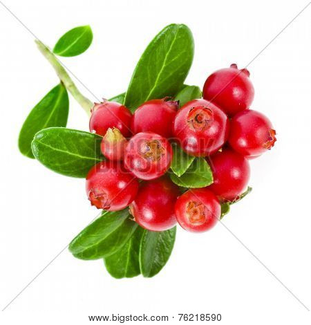 cranberries cowberries heap isolated on white background