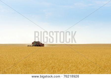 grain harvester combine work in field