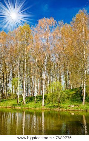 Spring  Grove Next To The Nice Pond.
