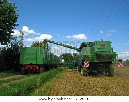 Harvest on a cornfield