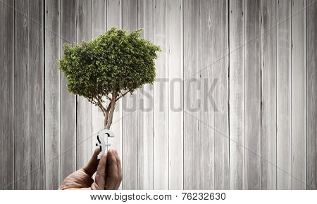 Close up of human hand holding sprout