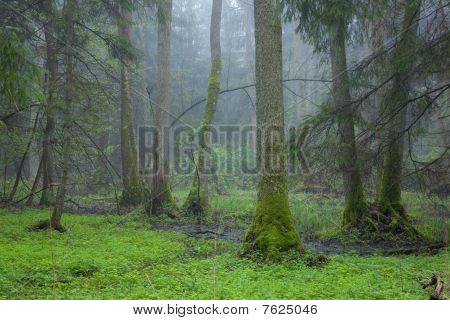 Riparian Stand In Springtime With Fresh Green Bottom