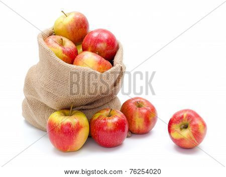 Ripe Apples In Burlap Sack