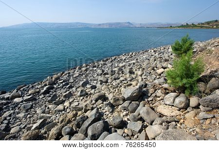 Beach Of Capernaum