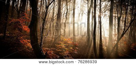 Autumn forest with lights