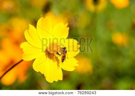 Bee insect on beautiful yellow flower