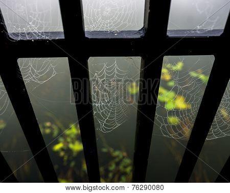 Cobwebs On Bridge