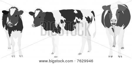 Three Greyscale Cows