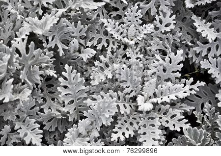Abstract Background Of Leaves.