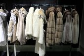foto of arctic fox  - Fur coats on the hangers at a shop - JPG