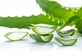picture of aloe-vera  - Aloe Vera leaves on white background - JPG