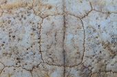 picture of carapace  - close up Texture of Turtle carapace death - JPG