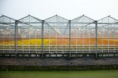 stock photo of greenhouse  - greenhouse full of blossoming flowers in holland with artificial light - JPG