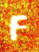 image of initials  - Initials letter F - JPG