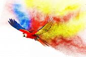 pic of parrots  - Colourful flying parrot isolated on white  - JPG