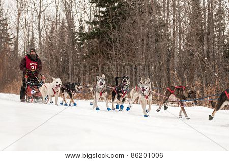 Beargrease 2015 Mid Distance Kevin Mathais On Trail