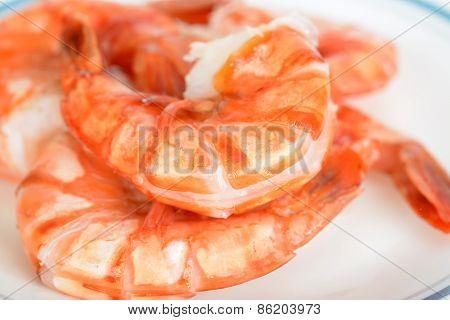 Shrimp Prawn