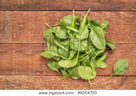 fresh baby spinach leaves against rustic,  red barn wood table
