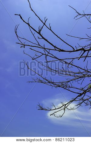 Branch Of Dry Tree