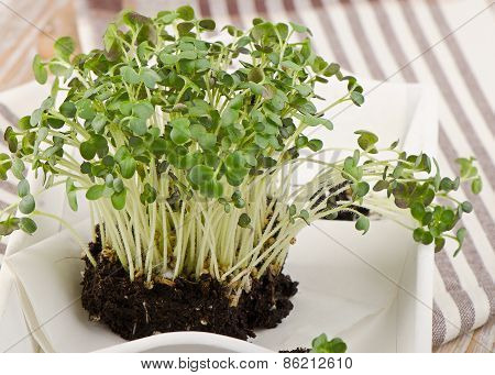 Cress In  White Wooden Box.