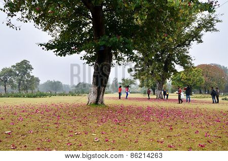 Chandigarh, India - January 4, 2015: Tourist Visit Zakir Hussain Rose Garden In Chandigarh, India.