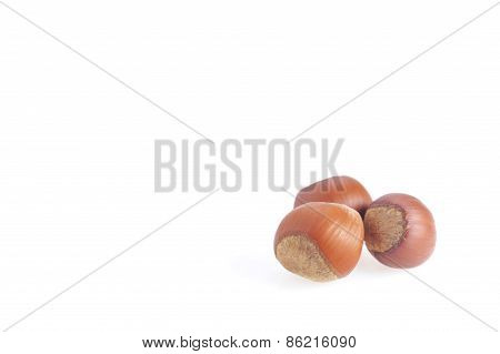Hazelnut  Isolated