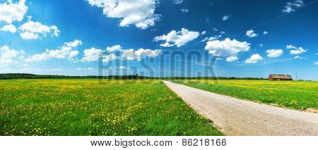 Road on dandelion field