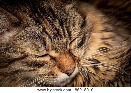 Fanny face of sleeping cat