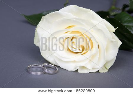 Close Up Of Beautiful White Rose Flower And Wedding Rings Over Grey