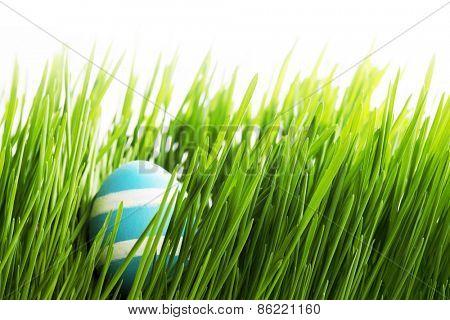 Easter Egg in fresh green grass isolated on white background