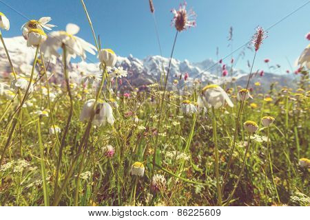 Vintage style summer mountains meadow