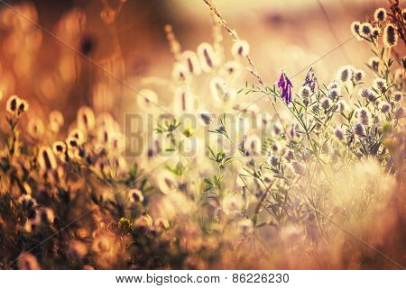 Vintage style summer meadow