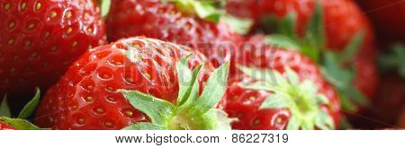 Juicy Red Strawberries