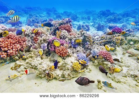 Underwater World With Corals And Tropical Fish.