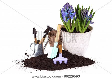 Flower In Pot, Ground  And Garden Tools