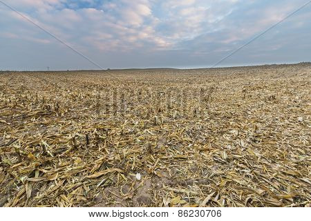 Stubble Field After Corn