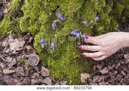 moss on a tree birch