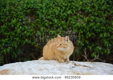 Street Cat Eats Food On The Rock