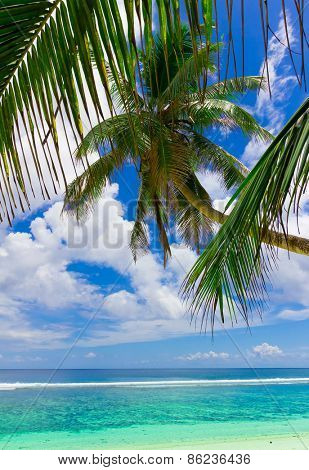 Wallpaper Palms Coast