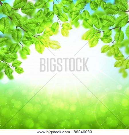 Abstract Nature Background With Leaves And Sun