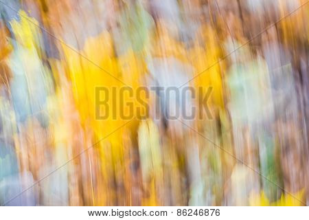 Forest Abstraction. Long Exposure Photo Of Autumnal Forest