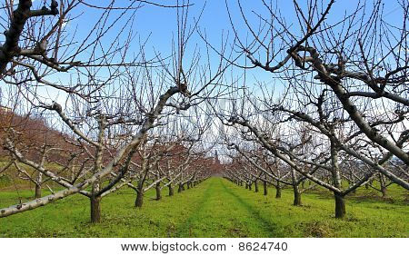 Winter Landscape In Tuscany Italy- Toscana