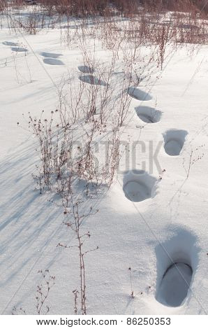 Footprints in the deep snow