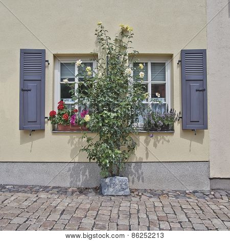 picturesque windows and flowers Altenburg Germany