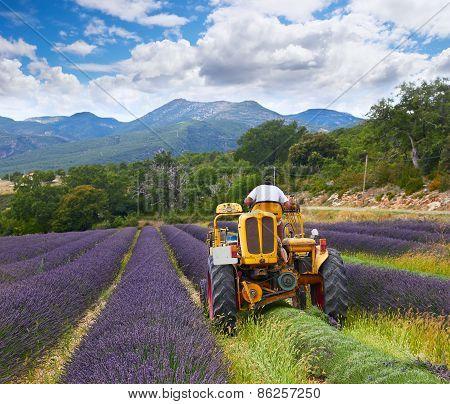 Lavender Harvest, France
