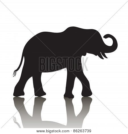 vector elephant silhouette with shadow