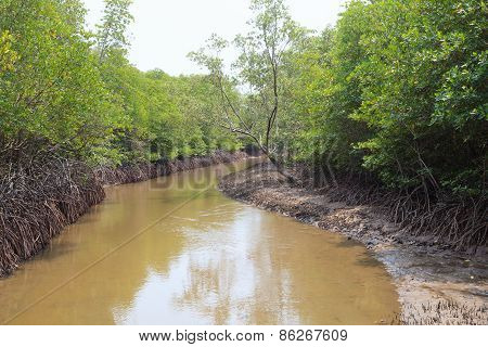Natural Coastal Mangrove Forest Environment Wilderness
